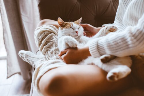 Gato sendo acariciado