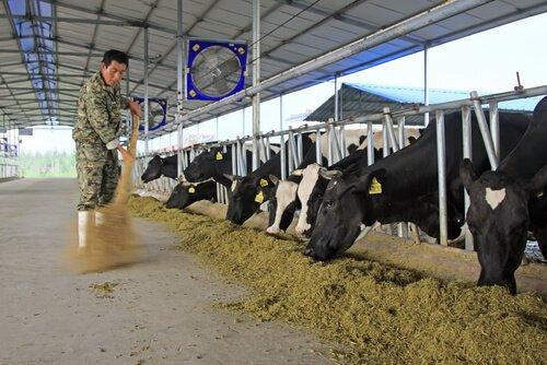 higiene e saude da fazenda
