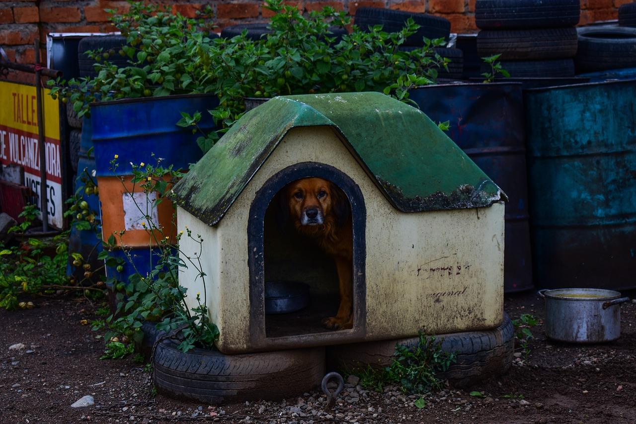 Cachorro dentro de sua casinha