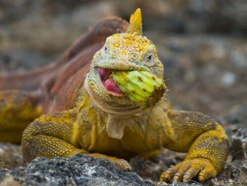 Falta de vitaminas e cálcio em iguanas