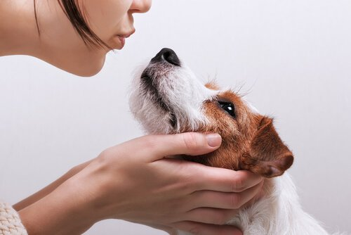 Infecção por Campylobacter presente em cães