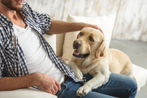 Homem fazendo carinho em cão doente