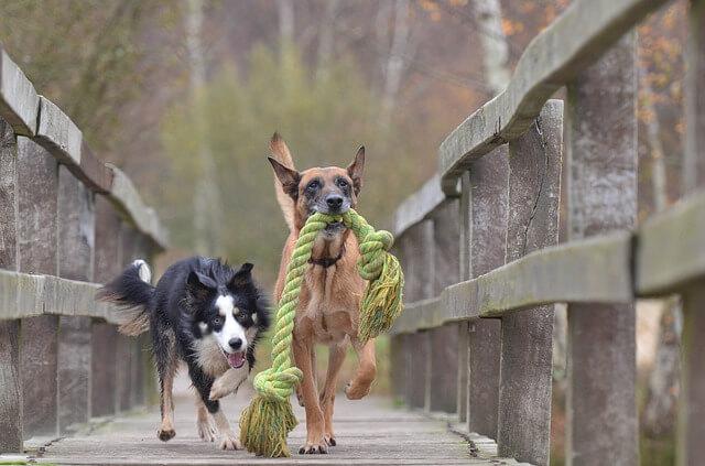 Saiba por que é tão importante que seu cão aprenda a socializar