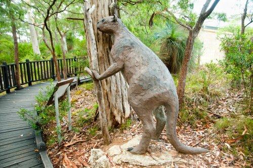 Canguru gigante de cara achatada