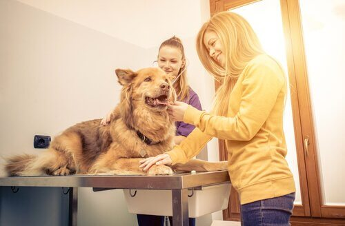 Cachorro no veterinário