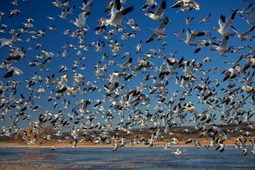 As migrações em massa mais incríveis