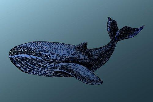 As baleias vivem muito tempo