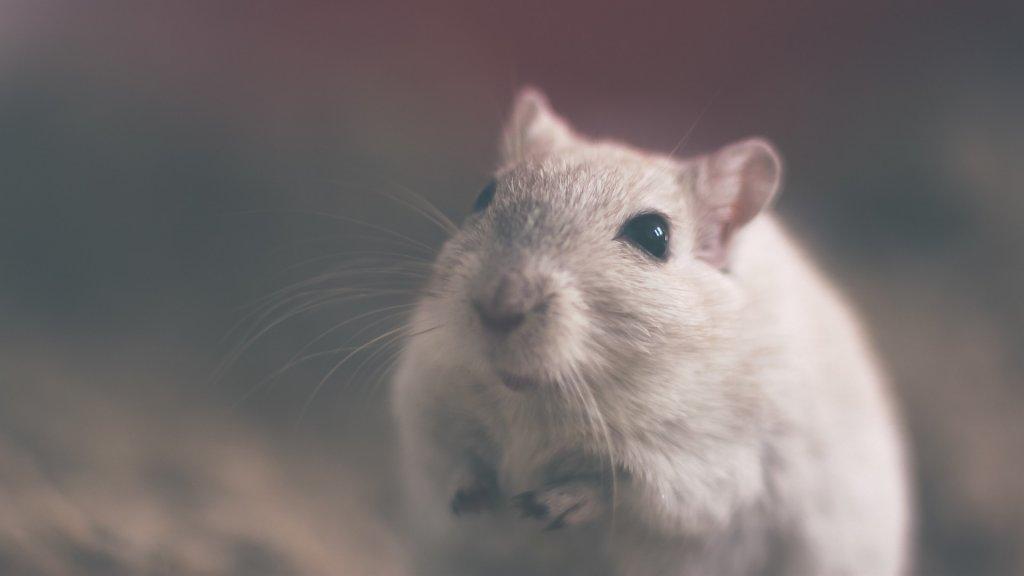 Descubra como montar a gaiola perfeita para seu hamster