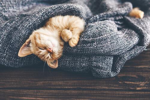 Como as mudanças de temperatura afetam os gatos?