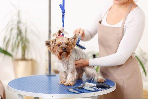 Mulher escovando cachorro