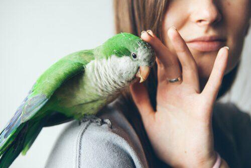 A doença do bico e da pena