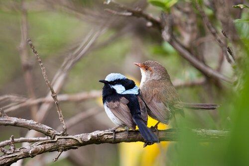 Pássaros de espécies diferentes