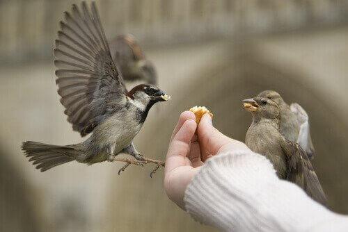 Como alimentar um pássaro corretamente