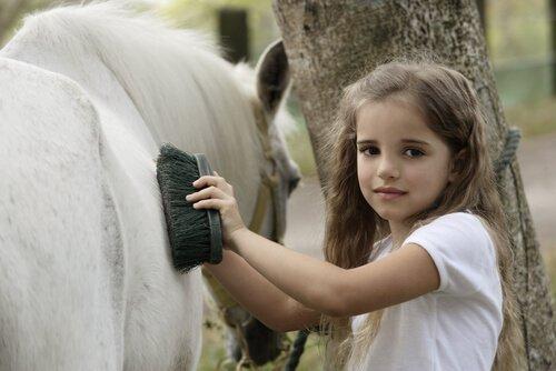 De qual limpeza diária seu cavalo precisa?