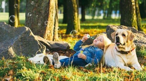 Raças de cães tranquilos: conheça 5 delas!