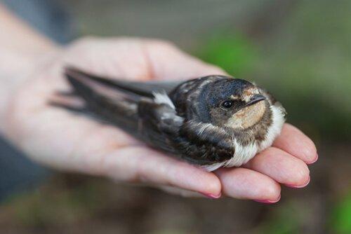 Como saber se um pássaro está doente?
