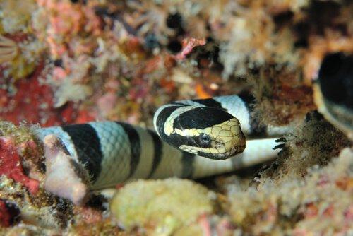 Serpente marinha mitos