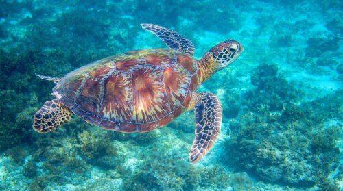 A carapaça da tartaruga