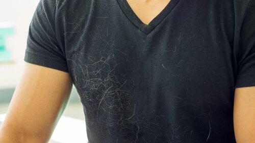 Dicas para eliminar os pelos de cães de sua casa de uma vez por todas