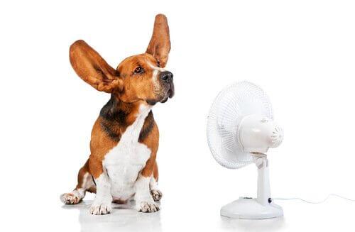 Cachorro e ventilador