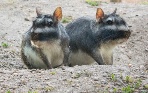 5 animais que vivem em pastagens
