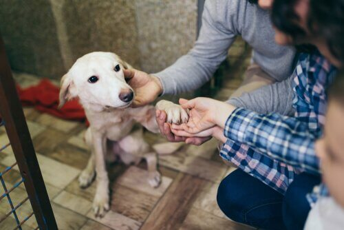 Cão abandonado e resgatado