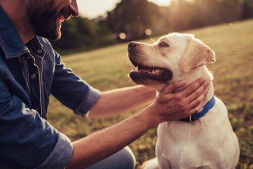 Homem fazendo carinho no seu cachorro