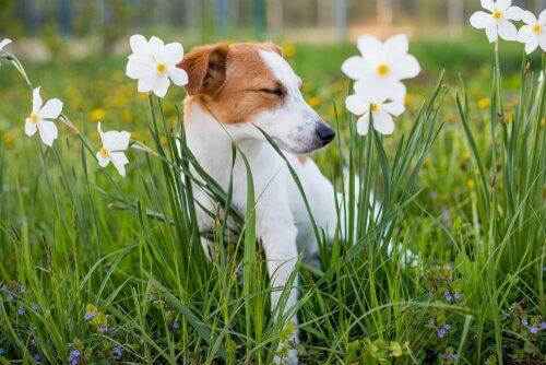 Tudo que você precisa saber sobre a alergia a plantas em cães