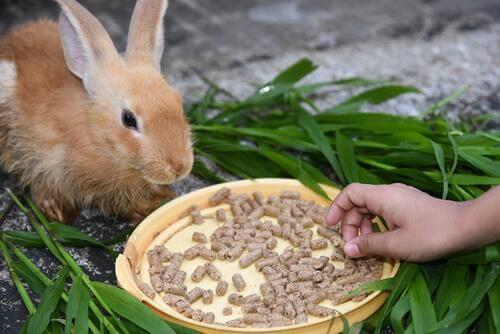 Alimentação dos coelhos no verão