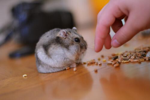 Alimentação dos roedores