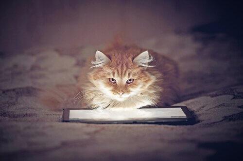 Jogos de tablet para gatos