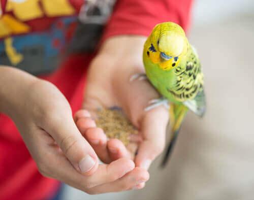 Aves ideais para crianças pequenas