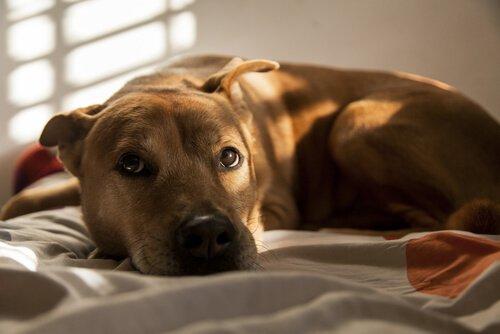 Medos mais frequentes dos cachorros