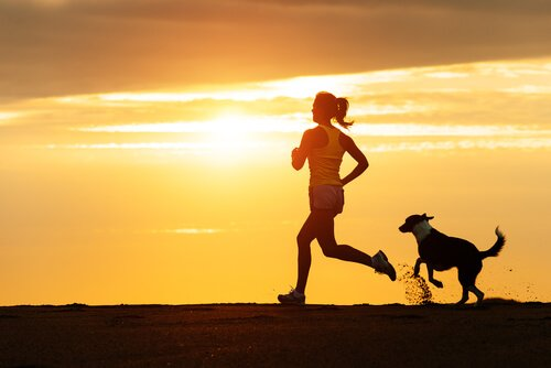 Conselhos para começar a correr com seu cão