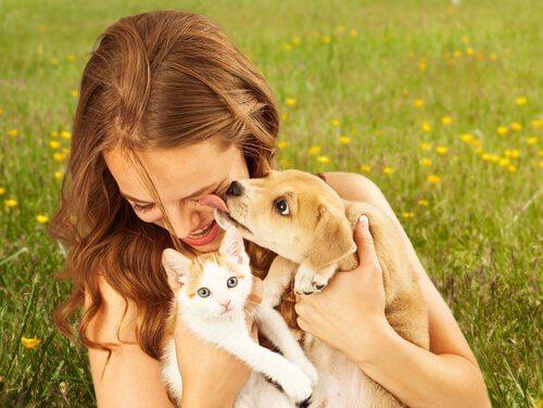 Por que os cães são mais sociáveis que os gatos?