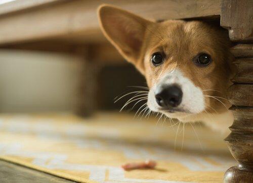 Cão assustado por causa de barulho