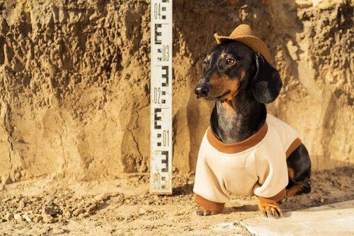 Amizade entre homem e cão, desde o período Neolítico?
