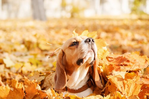 Outono: aproveite para brincar com seu cão nas folhas