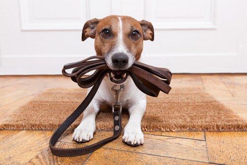 Cachorro pronto para passear