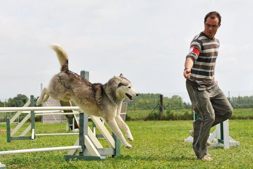 Treinamento de agilidade canina
