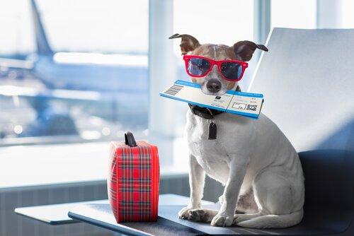 Como preparar seu cão para uma viagem de avião