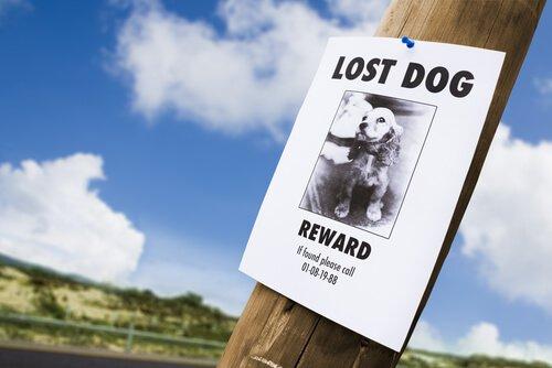 Cartaz buscando cão perdido