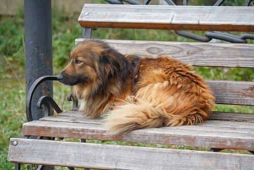 causas de abandono de cachorros