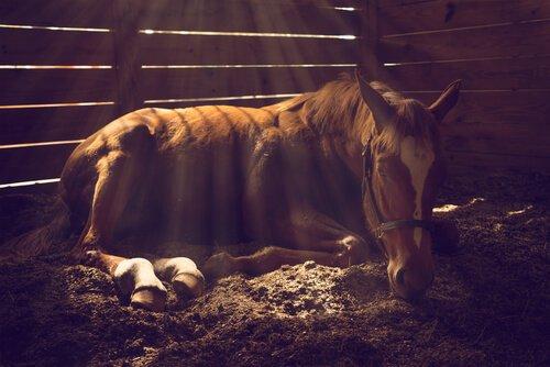 Tipos de cólicas dos cavalos