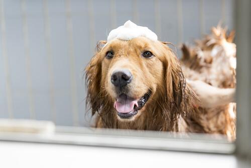 Colônias para cães