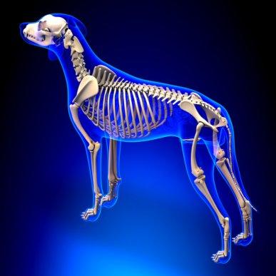 Coluna vertebral dos mamíferos: O que ela nos diz sobre a evolução?