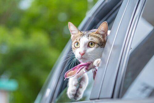 Gato na janela do carro