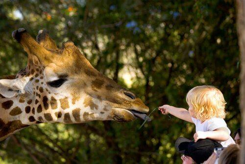 Zoológicos diferentes