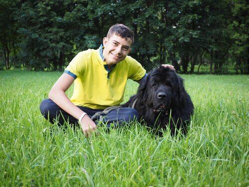 trabalhar como cuidador de cães