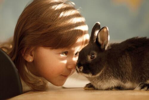 Como cuidar do seu coelho no calor